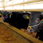 和牛と国産牛の違い・牛肉の格付けについて 藤沢の隠れ家ステーキバーwagyu sous vide